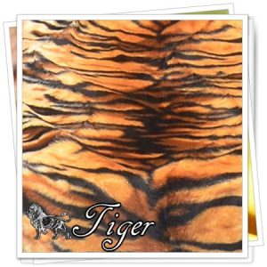 _animals_01_Tiger